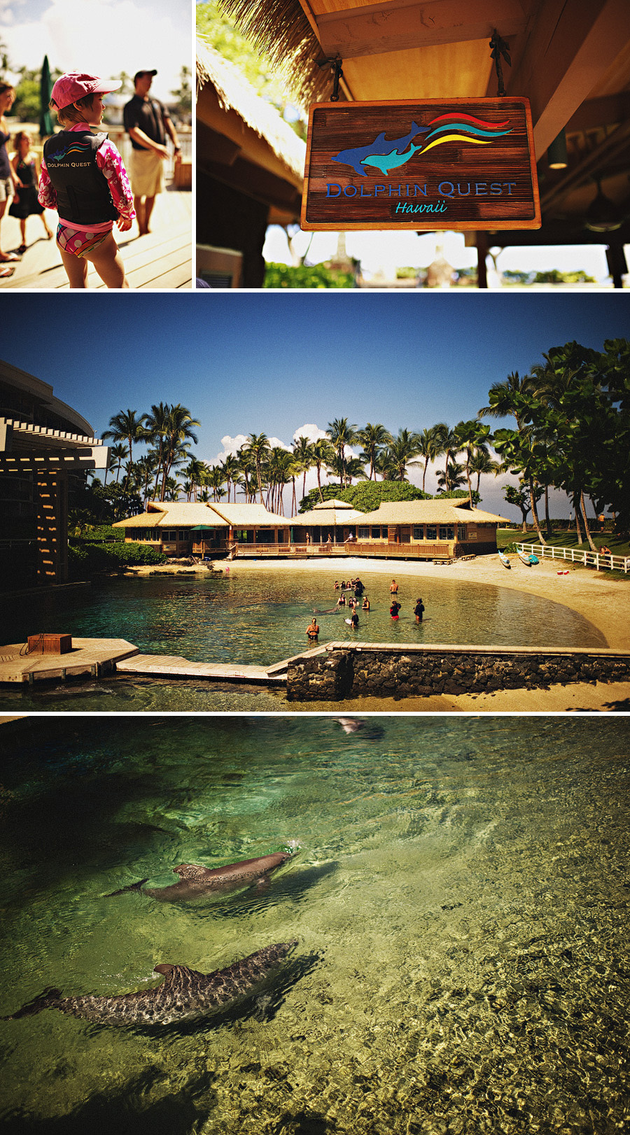 Hawaiian travel photography scenes from Dolphin Quest at the Waikaloa Village Hilton Hotel on the Big Island.